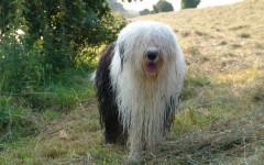 perdita pelo cane primavera