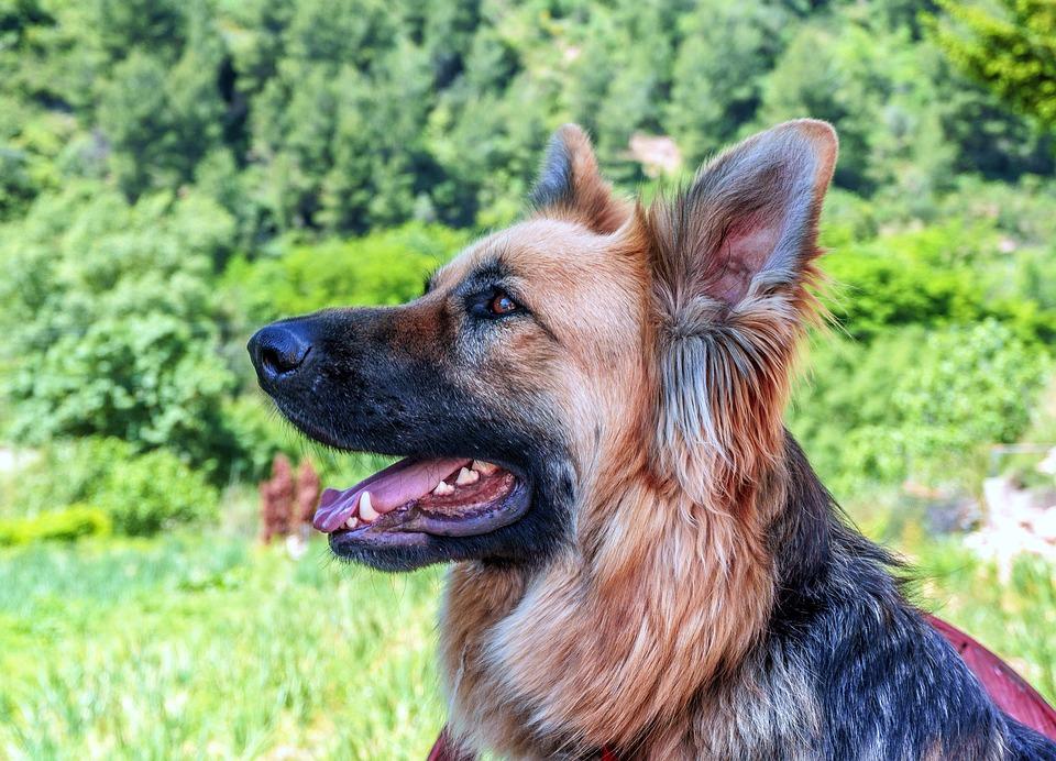cane allergia primavera