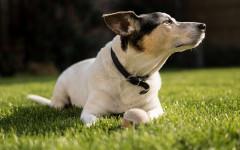 cane inappetente primavera