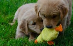 cuccioli primaverili