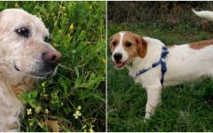 adozioni cani campania