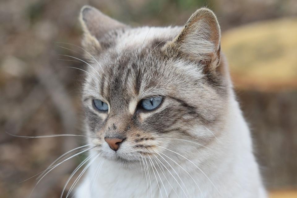 fusa gatto