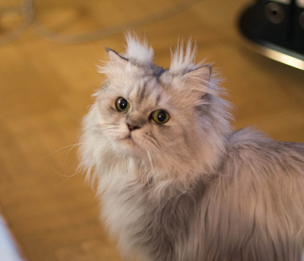 gatti golosi