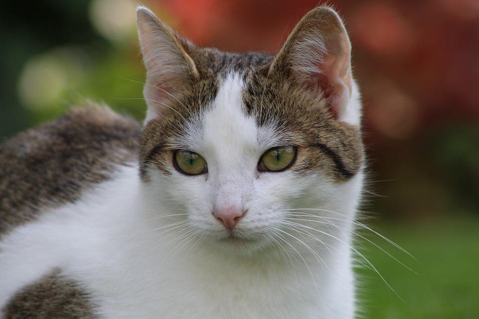 gatti lunatici
