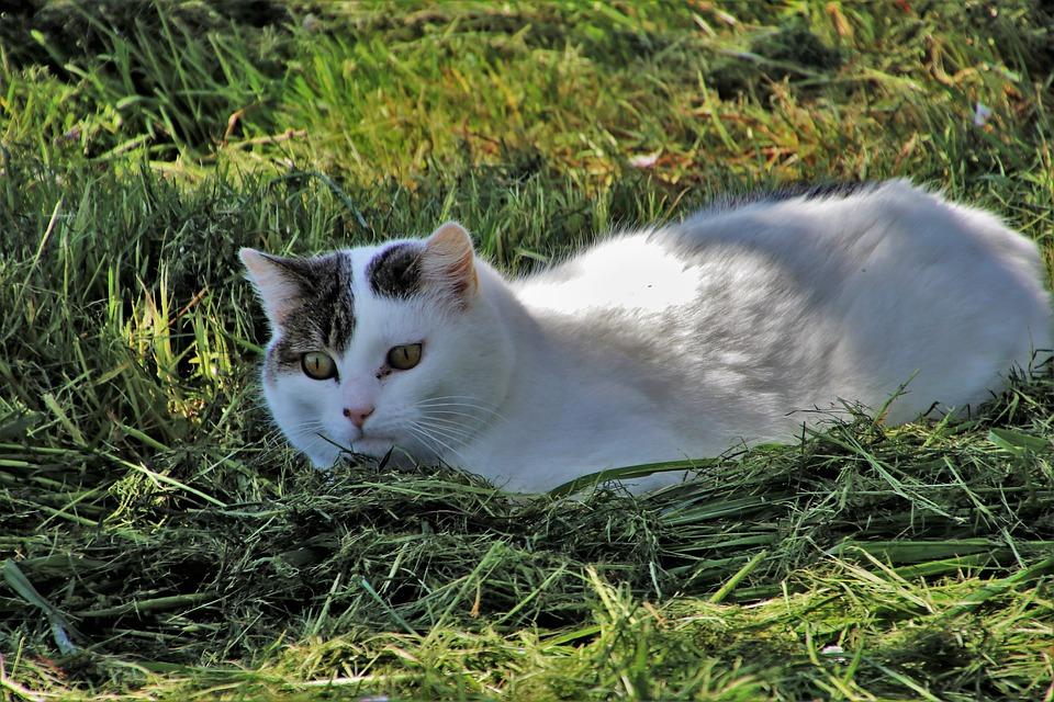 gatto allergia primavera