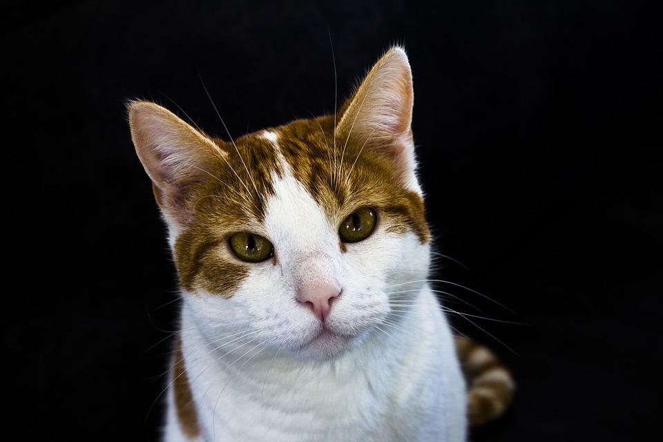 gatto dimagrito primavera