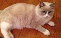 gatto mascotte