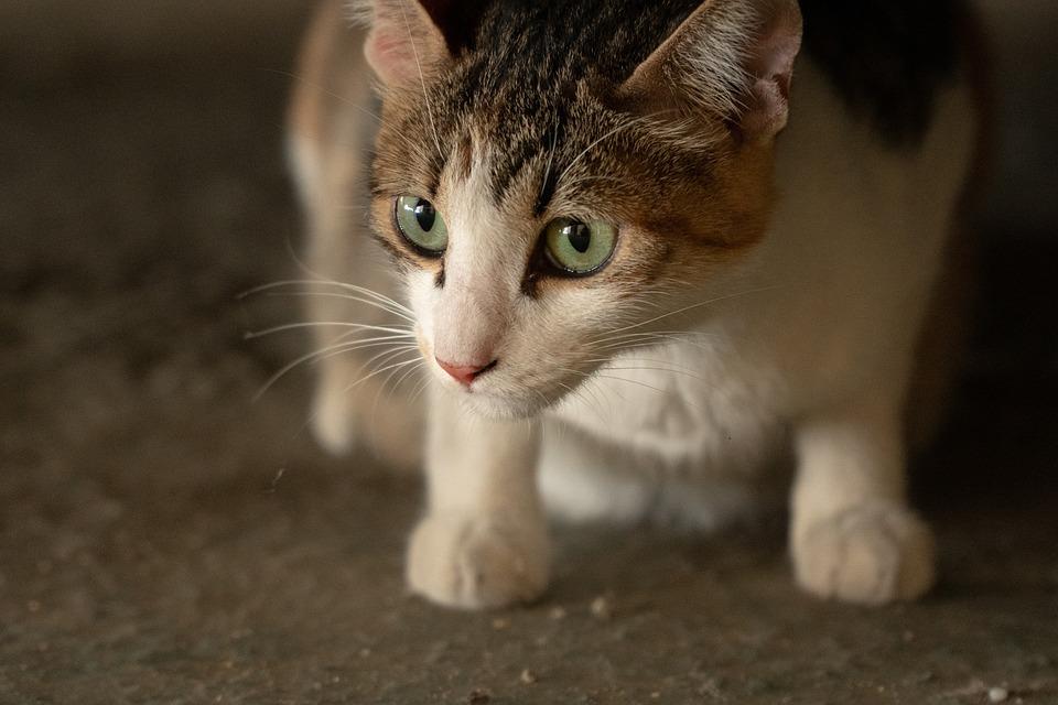 gatto primavera