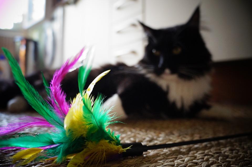 Juegos de gato