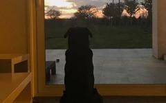perro de Emiliano Sala