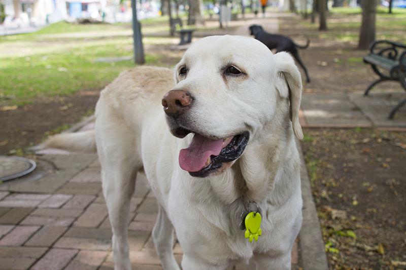 perro razas