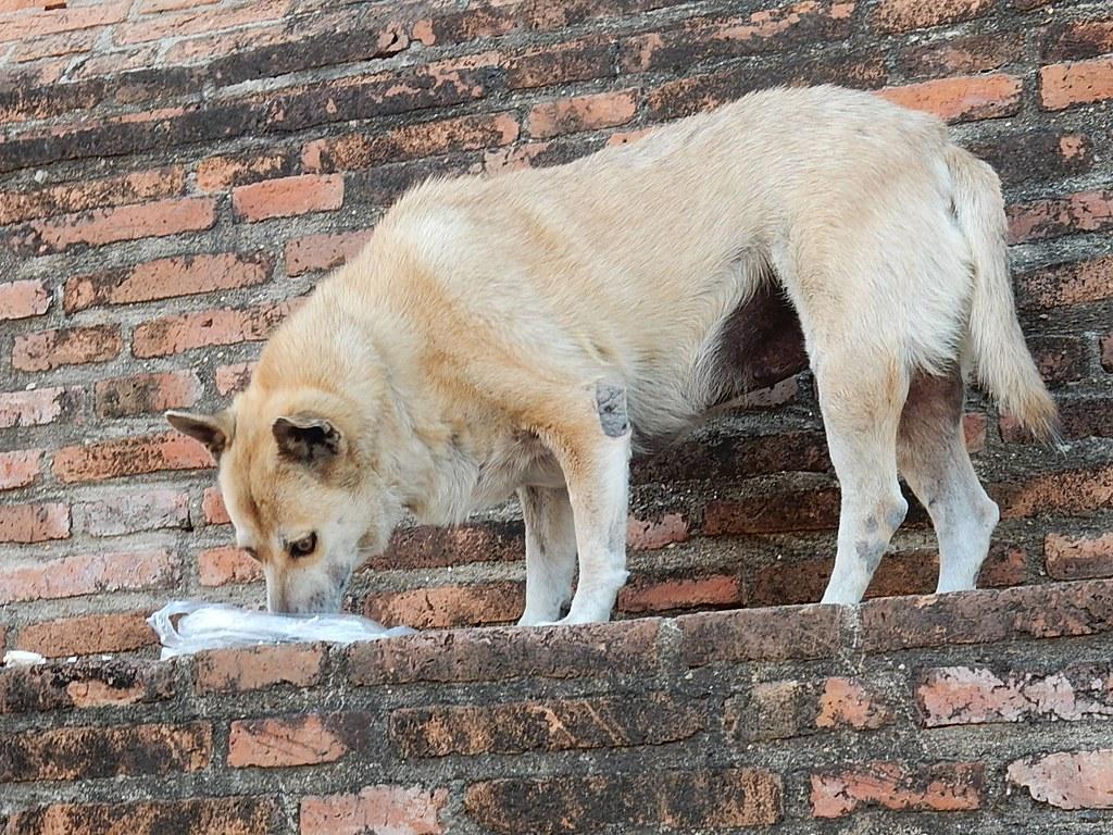 Orari pasti cane adulto