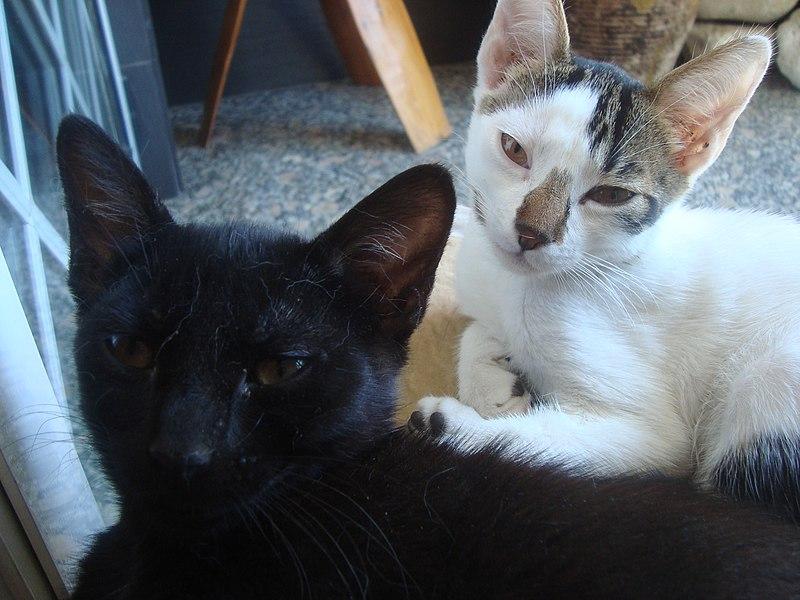 gato alergias