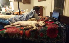 cama perro verano