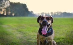 perro verano calor