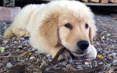 sindrome abbandono cane